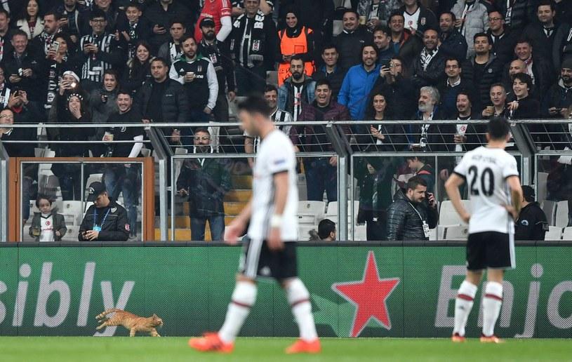 Kot na murawie w czasie meczu Besiktasu z Bayernem /AFP