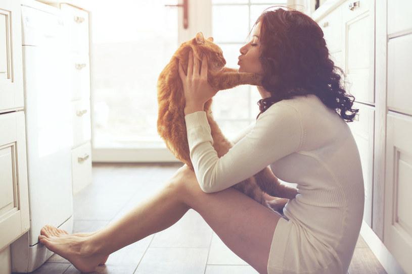 Kot - najlepszy przyjaciel człowieka? /123RF/PICSEL