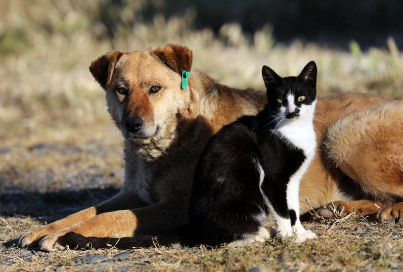 Kot najlepszym przyjacielem psa /AA/ABACA/Abaca/East News /East News