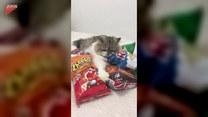 Kot nie chce się podzielić chrupkami