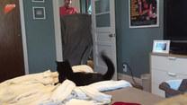 Kot oszalał, gdy właściciel zniknął