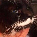 Kot-podróżnik przebył ponad 1000 kilometrów w poszukiwaniu właścicieli?