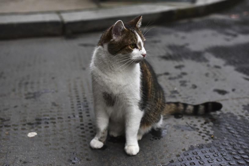 Kot prawdopodobnie zaraził się od człowieka, zdj. ilustracyjne /Alberto Pezzali/NurPhoto /Getty Images