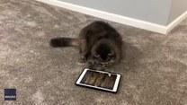 Kot próbuje złapać mysz... w grze na tablecie