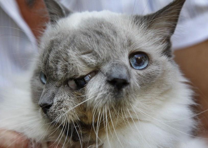 Kot przeżył 15 lat /Steven Senne /East News