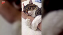 Kot przywłaszczył sobie... rękę właściciela