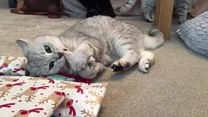 Kot rozpakował prezent. Reakcja bezcenna
