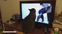 Kot sfrustrował się najnowszymi wiadomościami