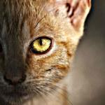 Kot-szpieg, czyli największa wpadka w dziejach CIA