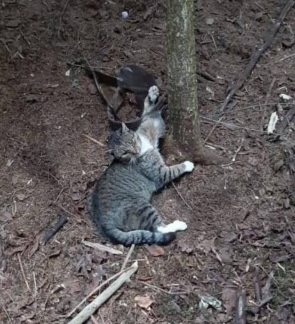 Kot wpadł we wnyki zastawione na niedźwiedzia /Policja