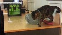Kot wpakował się w... torebkę foliową