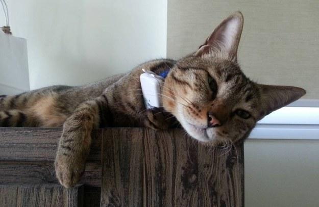 Kot z lokalizatorem GPS /materiały prasowe