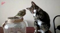 Kot zaczepia małego ptaszka. Jaki delikatny!