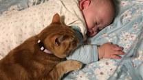 Kot zaopiekował się nowym członkiem rodziny