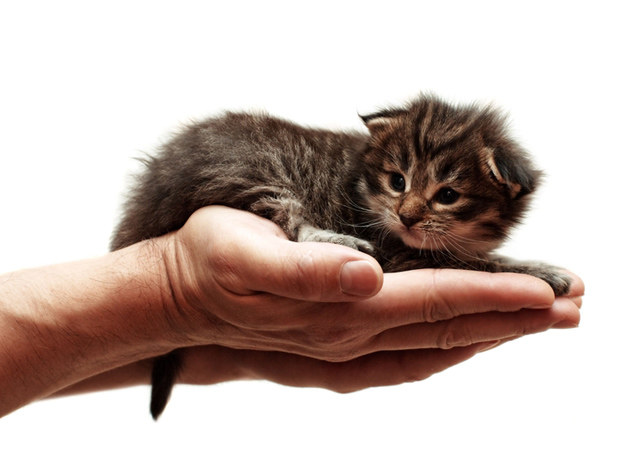 Kot ze schroniska i co dalej? /© Panthermedia
