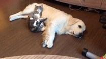 Kot znalazł idealną poduszkę