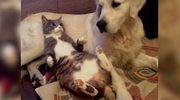 Kot znalazł oryginalną poduszkę