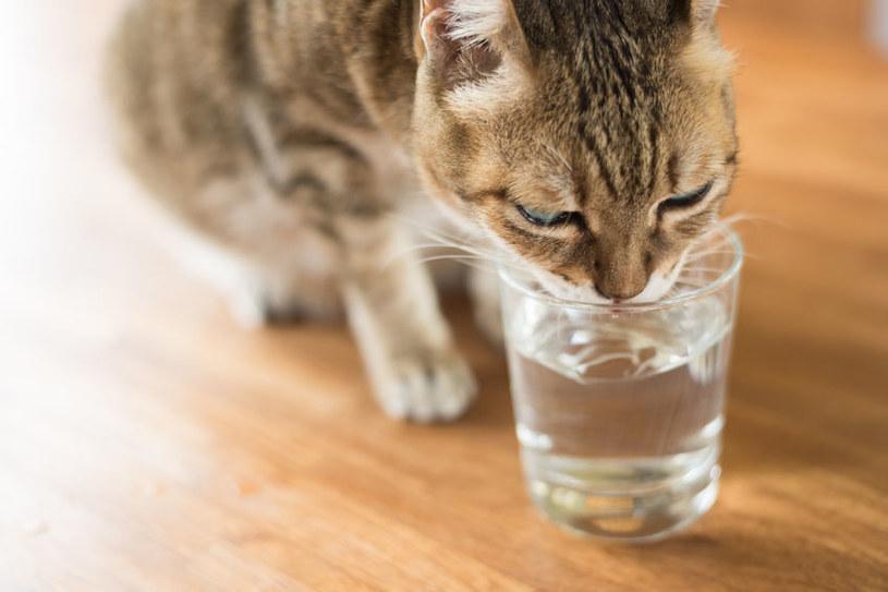 Kota można zachęcić do picia wody na różne sposoby