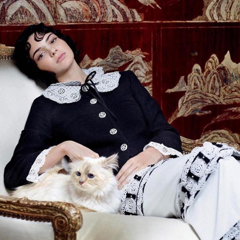 Kotka Karla Lagerfelda była gwiazdą sesji zdjęciowych /FaceToFace /Reporter