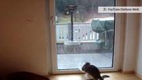 Kotka poluje na krople deszczu. Gdyby nie ta szyba...