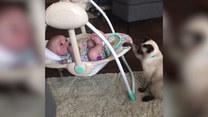 Kotka zaopiekowała się uroczym malcem