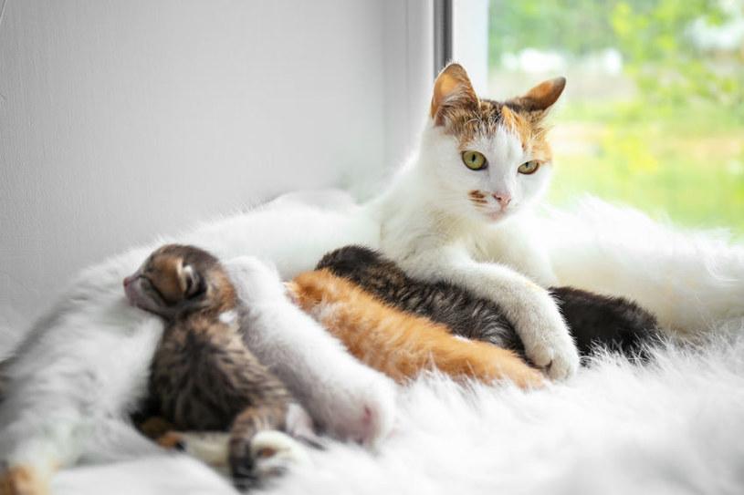 Kotki najbardziej płodne są w marcu /123RF/PICSEL