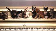 Kotki swiateczne