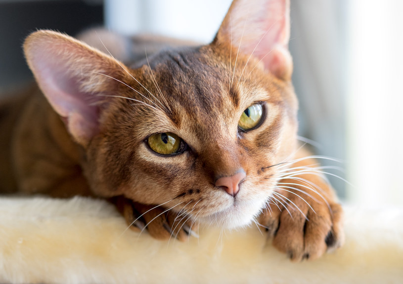 koty a ludzie /© Photogenica