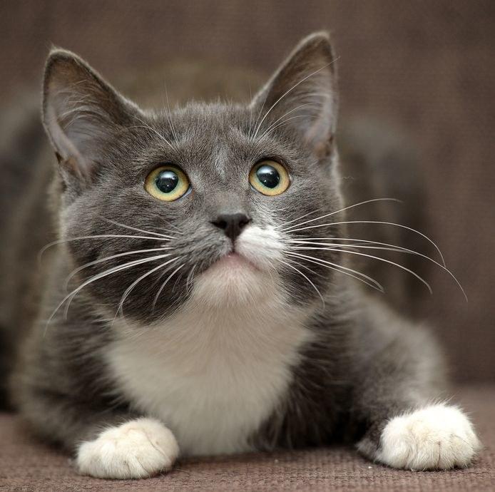 Koty często reagują na swoje imię /123RF/PICSEL