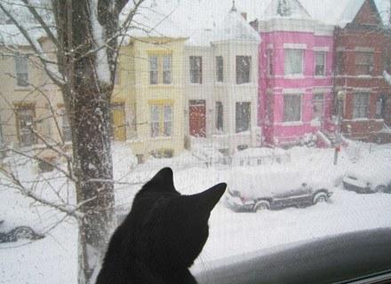 Koty często rozważają skomplikowane zagadnienia /AFP