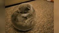 Koty i akwaria - to nie może się dobrze skończyć
