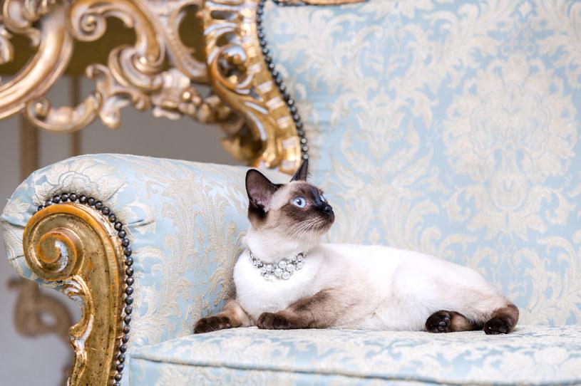 Koty jak mało które zwierzęta cenią sobie komfort (zdj. ilustracyjne) /123RF/PICSEL