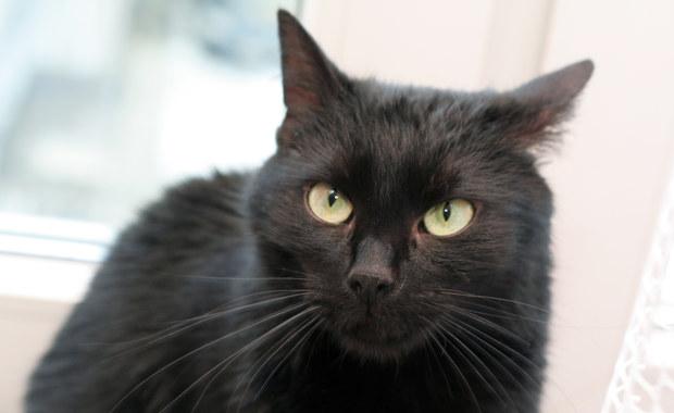 Koty łapią koronawirusa, ale nie ma dowodów, by mogły zarażać ludzi