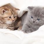 Koty  – leczą duszę i ciało