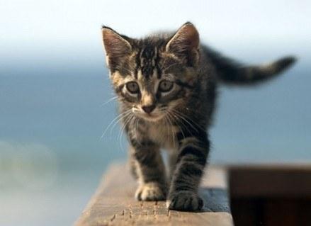 Koty mają swoje sposoby... /Kopalnia Wiedzy