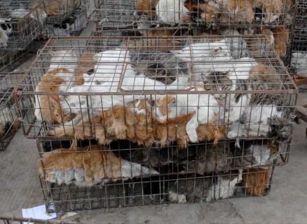 Koty na targu w Nanhai, Chiny /East News
