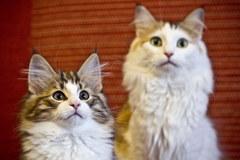 Koty obchodzą dziś swoje święto