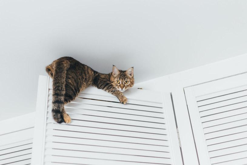 Koty oczyszczają dom, w którym żyją z toksycznych substancji /123RF/PICSEL