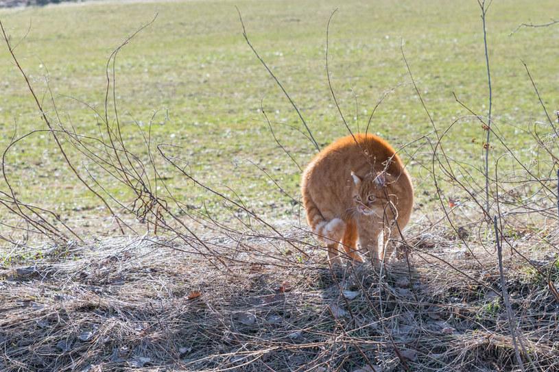 Koty również boją się huku /©123RF/PICSEL
