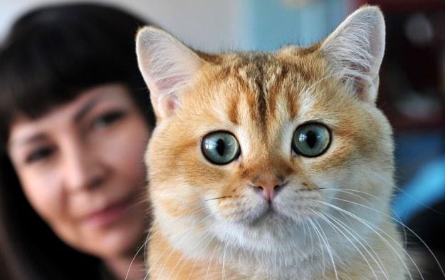 Koty są nosicielami kilku potencjalnie groźnych patogenów /AFP