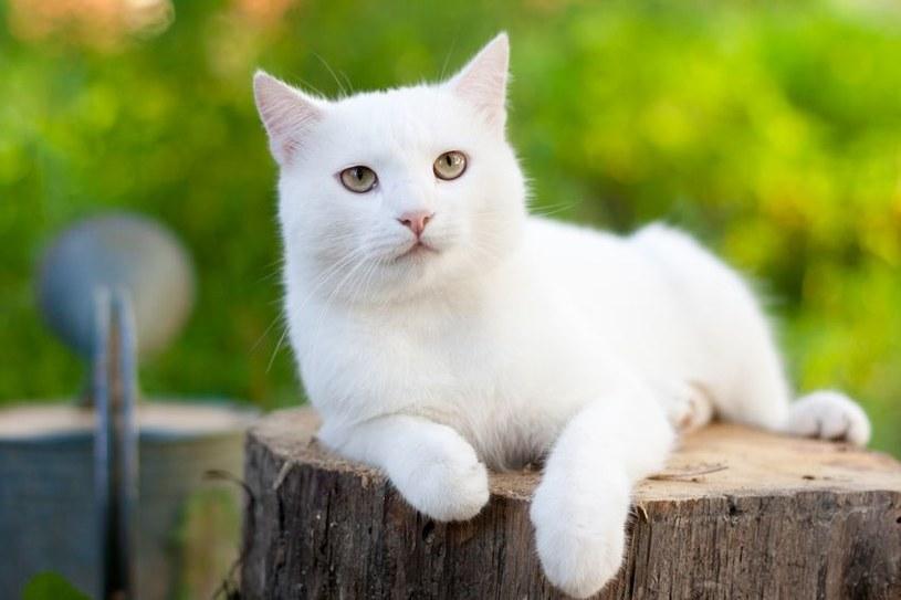 Koty są towarzyskie /©123RF/PICSEL