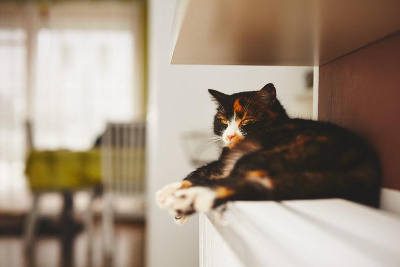 Koty są zwierzętami ciepłolubnymi /123RF/PICSEL