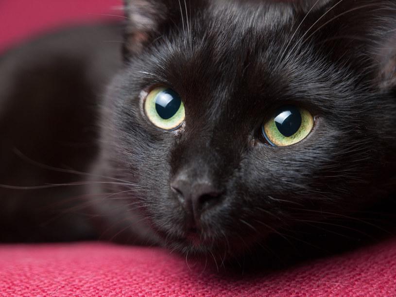 Koty szybko się uczą własnych imion /123RF/PICSEL