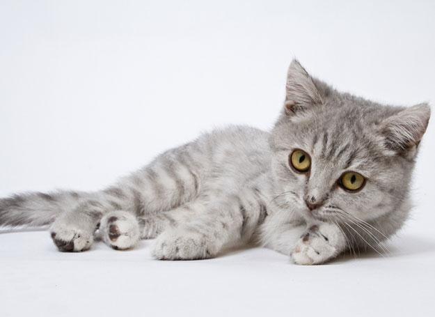 Koty też mają swoje święto! /© Panthermedia