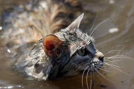 Koty to wyjątkowo ufne zwierzęta. /AFP