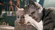 """""""Koty"""": Usuwał wstydliwe części kocich ciał"""