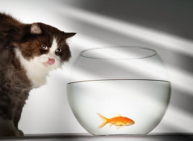 Koty wiedzą, co dobre /© Panthermedia