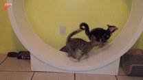 Koty zaskoczyły swoim podejściem. Co pokazały?