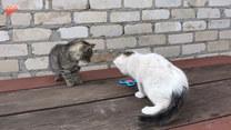 Koty znalazły nową zabawkę. Co to takiego?