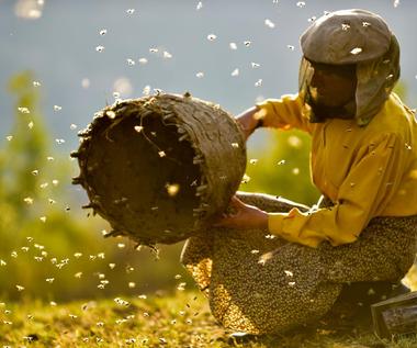 """""""Kraina miodu"""": O ludziach, pszczołach i harmonii [recenzja]"""